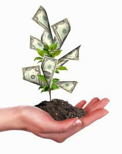 Small Business - Money Grows on Trees?